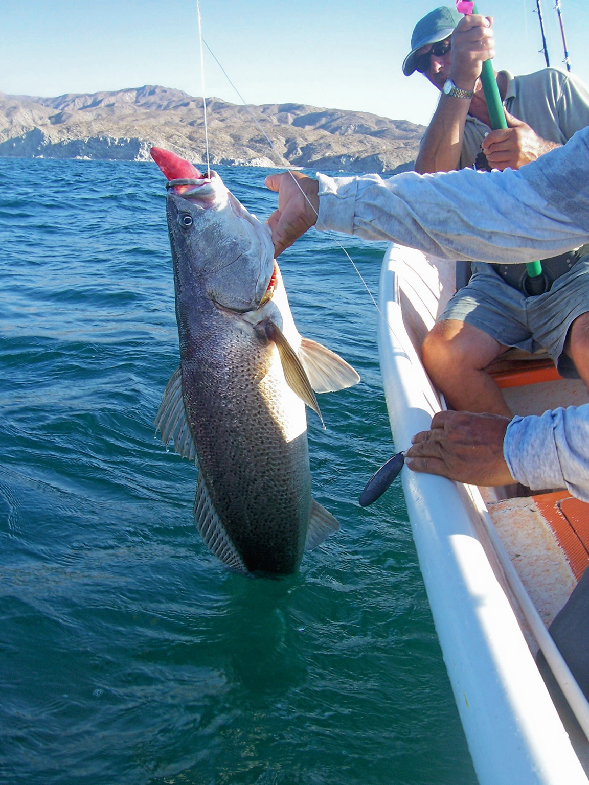 Tony reyes fishing tours photo gallery for Fishing vacation packages